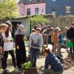 Gemüseanbau im Schulgarten